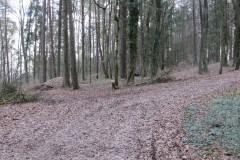 4.-Bild-Weg-zum-Parcours