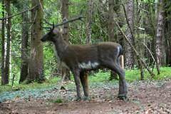 Ziel-16-Tier