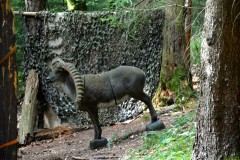 Ziel-25-Tier
