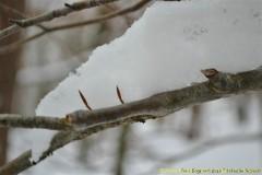 Winter-2011-04