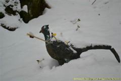 Winter-2011-06