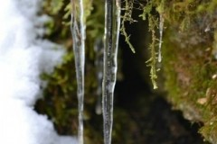 Winter-2011-08